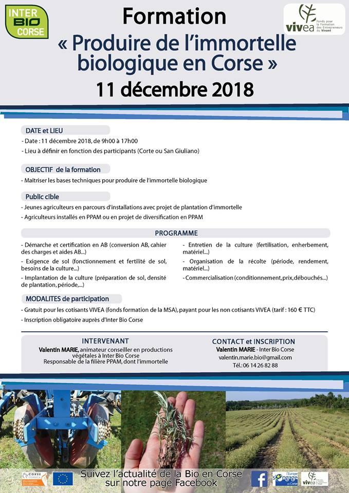 Produire de l'immortelle biologique en Corse